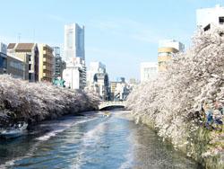 横浜大岡川