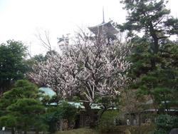 横浜本牧三渓園